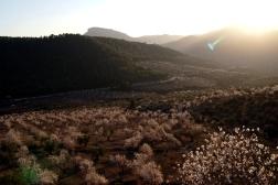 Floración del almendro